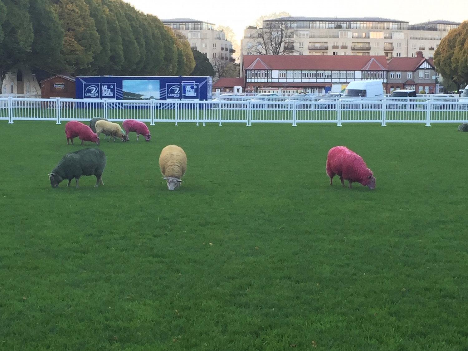 Web Summit Sheep